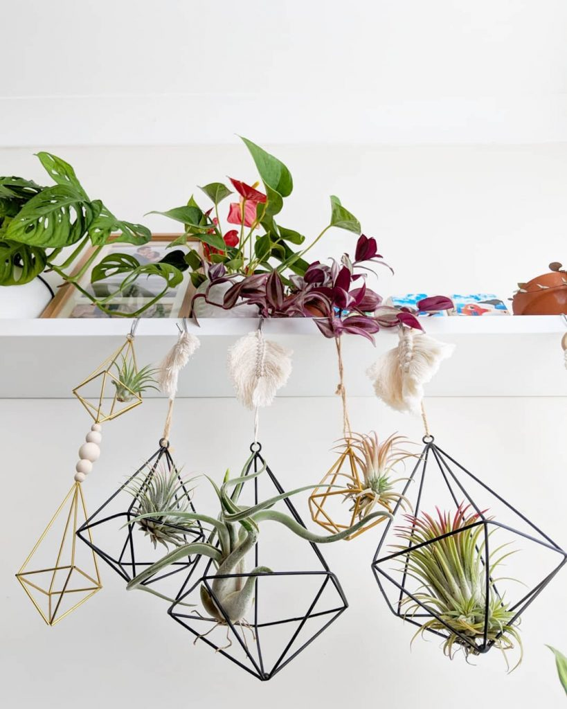 16 Ways You Can Display Air Plants